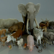 ANIMALS_FULL_PACK_RENDER