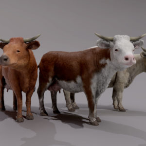 COW_RENDER
