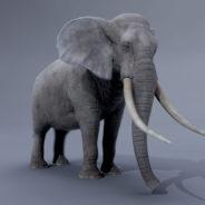 ELEPHANT_RENDER