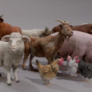 FARM_ANIMALS_PACK_RENDER