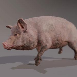PIG_RENDER