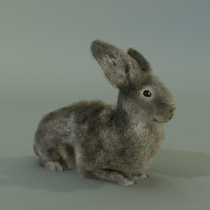 RABBIT_RENDER