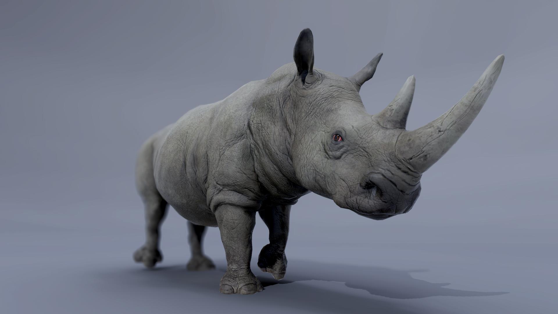 rhinoceros render