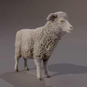 SHEEP_RENDER